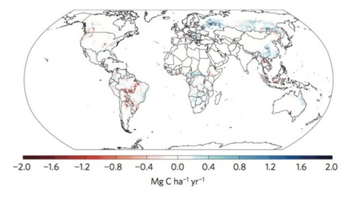 "Increases in above ground biomass carbon (in blue) can be seen in Russia, China, southern Africa, and northern Australia. (""Recent reversal in loss of global terrestrial biomass,"" Nature Climate Change.)"