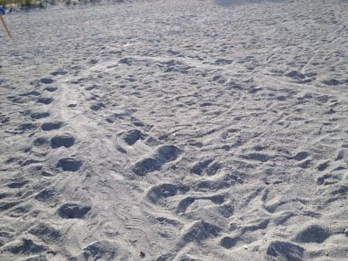 Tracks alone