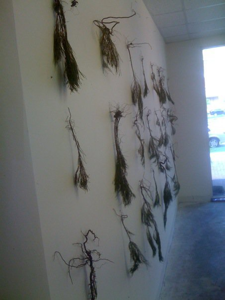 "Xavier Cortada, ""Hanging Gardens: Australian Pine at Brickell Studio,"" 24 nails and exotic invasive tree saplings uprooted from Virginia Key on North wall of artist's Brickell Studio, 8 ft x 16 ft, 2010."