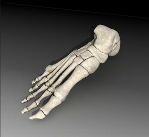Foot Skeleton