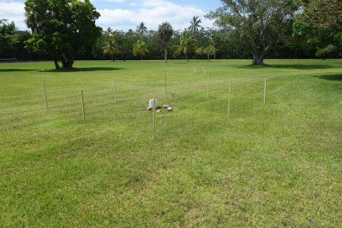 Mangrove planting for future beach. Collaboration Weiss, Cortada & Simpson