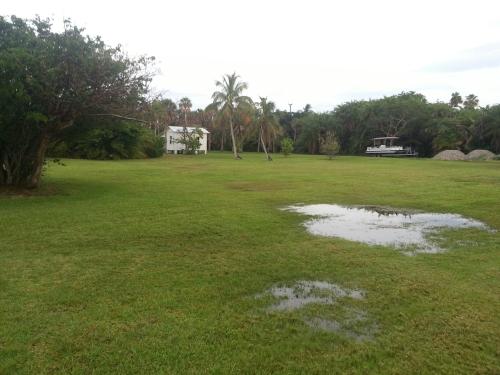 Mangrove planting zone after rain.