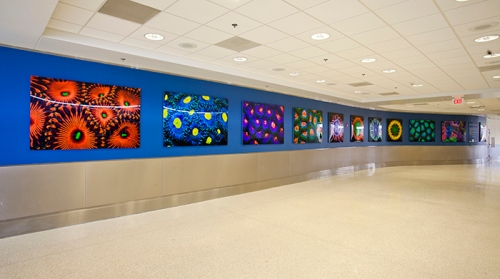 Colin Foord exhibition at MIami International Airport
